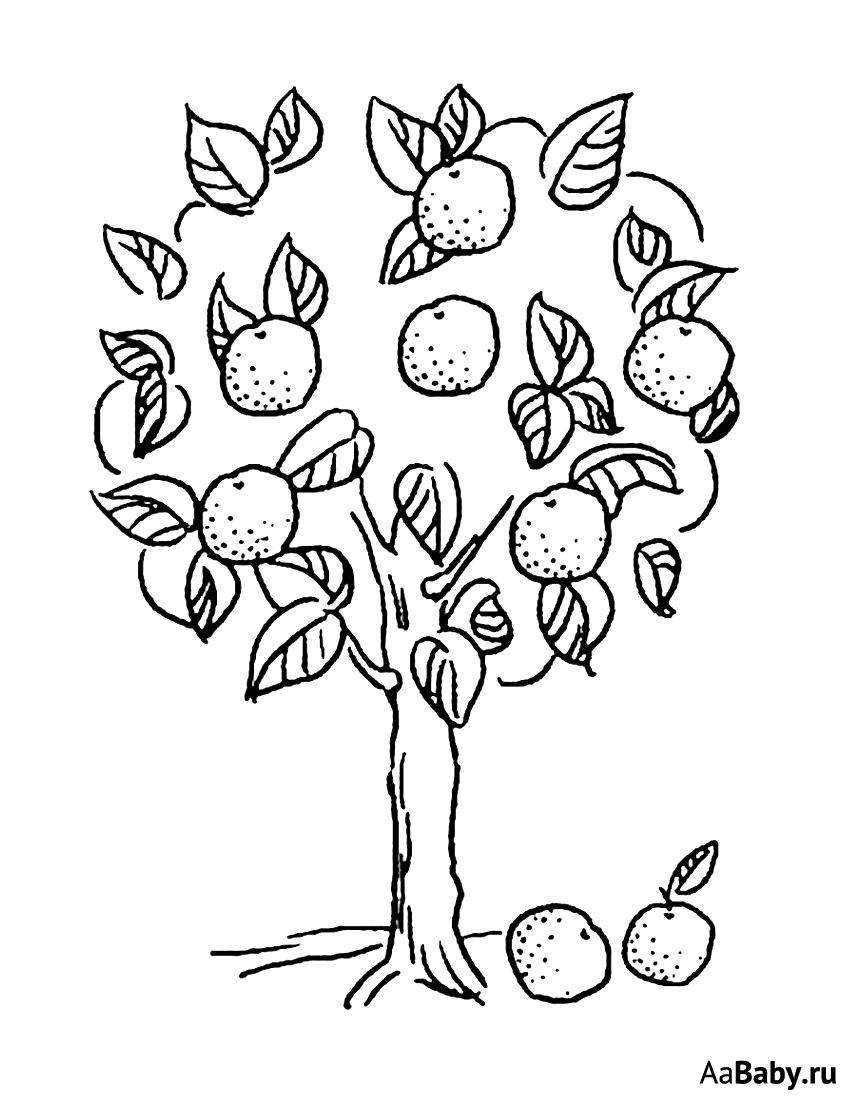 Картинка яблони с яблоками раскраска