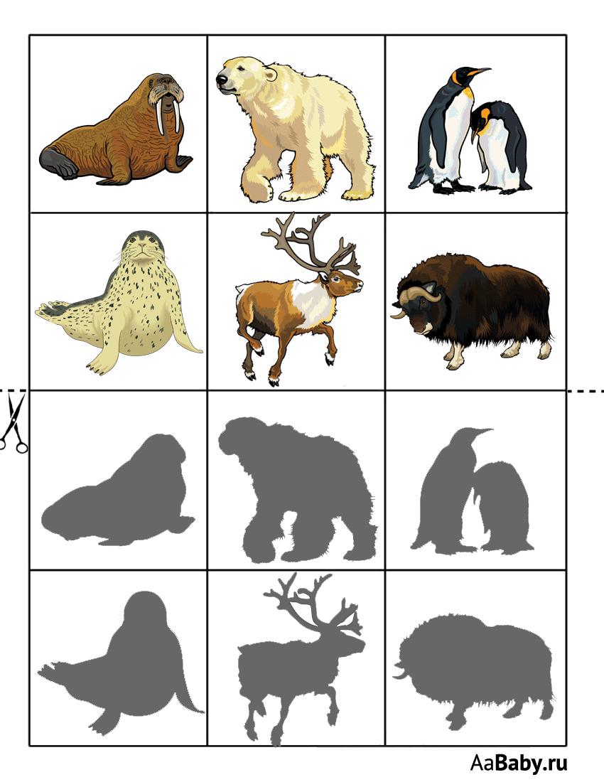 рекламу дидактические картинки животные севера надо сказать